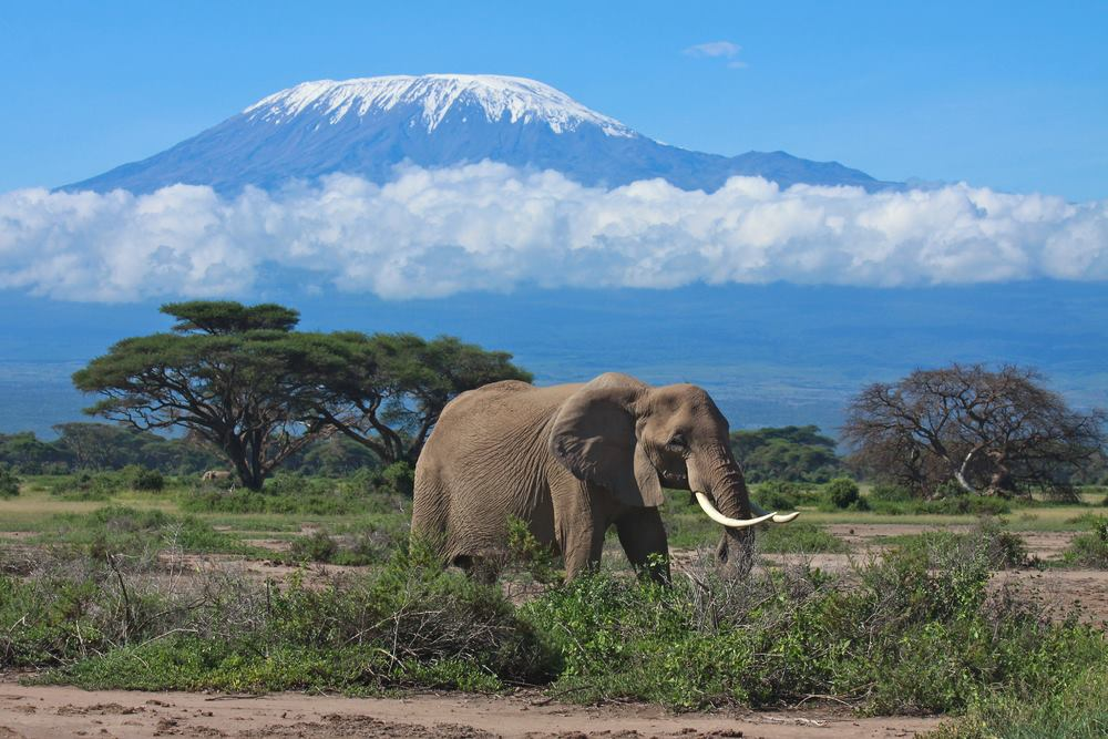 KILIMANJARO CLIMB PACKAGES
