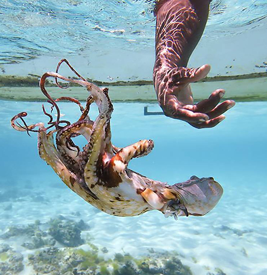 The octopus hunters of Zanzibar